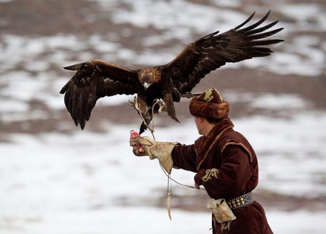 La caza con águilas en Kazajistán 7