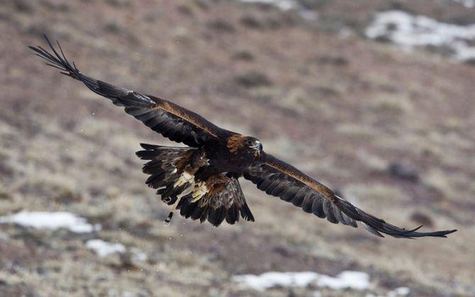 La caza con águilas en Kazajistán 11