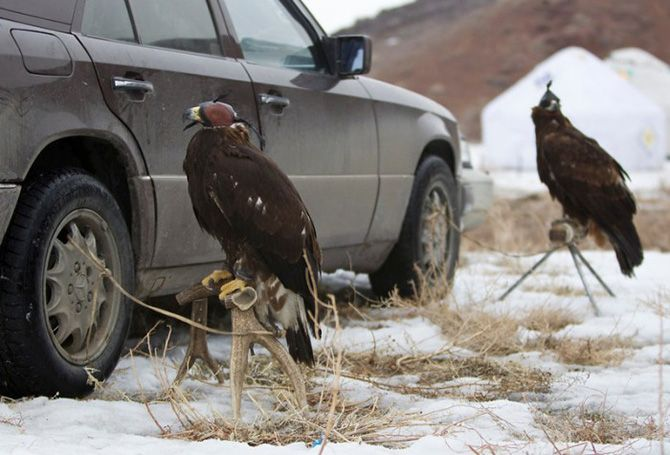 La caza con águilas en Kazajistán 14