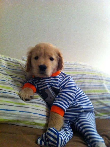 Прикольные фото костюм, псина, собака