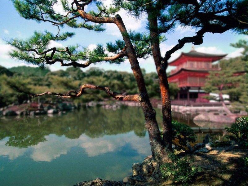 Фото дерево, китай, красота природы, озеро