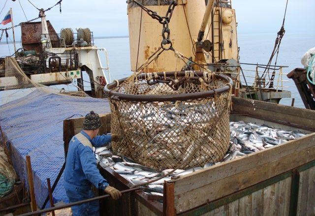 Ямальские рыбаки за 4 месяца добыли более тысячи тонн рыбы