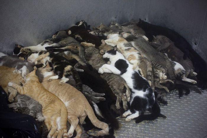 Усыпить собаку на дому цена спб
