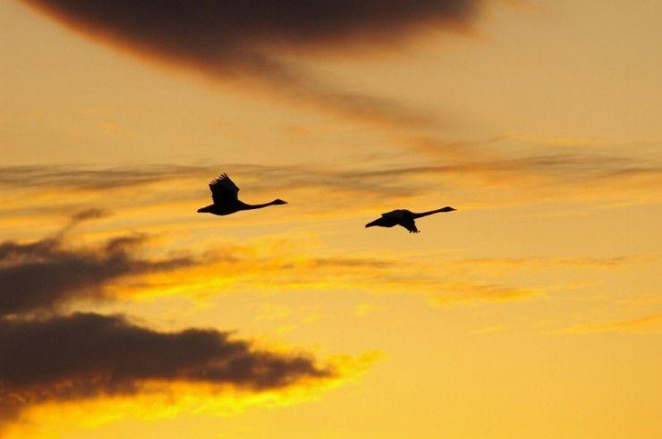 Фото в небе, журавли, закат, красота, птицы