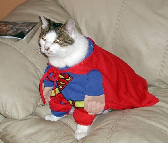 Фотоприкол онлайн костюм, нарядил кота, прикол, сумермен