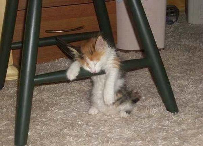 Фото заснул, котенок, нелепая поза, спит