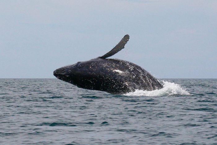 кит, лодка,