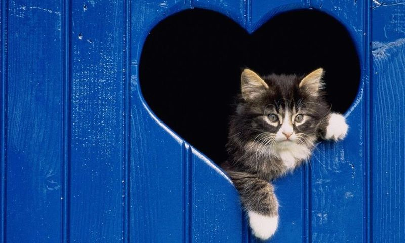 Фотожесть котейка, питомец, прикольное фото, сердечко