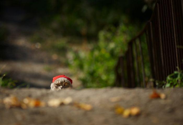 Пикантный фотоприкол аллея, выражение лица, котейка, лес