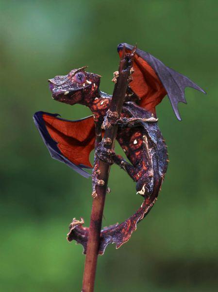 Яркие фото ветка, дракон, круто, маленький