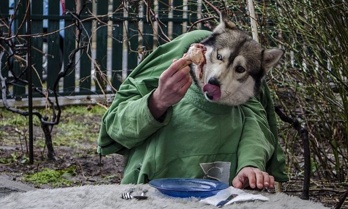 Шикарное фото как человек, крылышко, собака ест