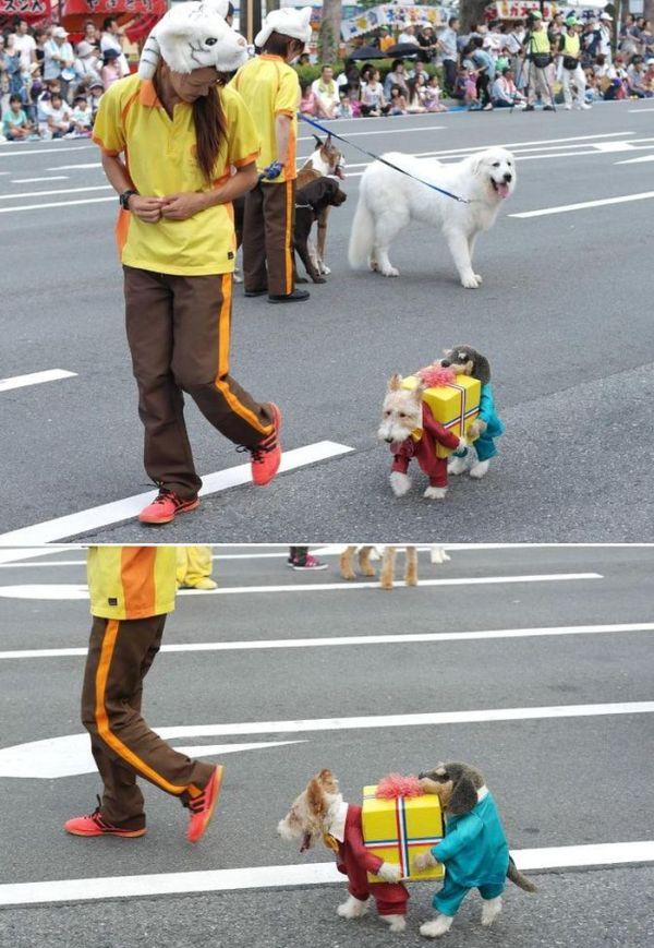 Фотоприкол дня костюм пирата, нарядил пса, прикол, собака