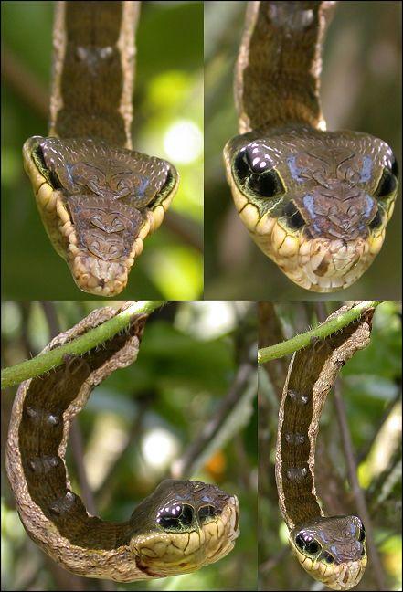 Пикантный фотоприкол гусеница, змея, страшная, чудовище