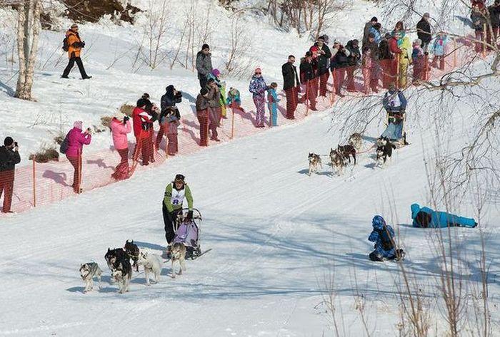 гонки, соревнования, собаки, зима