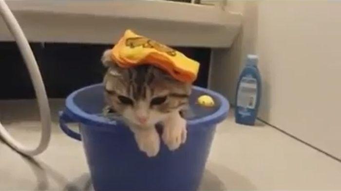 кот, кошка, ванна, водные процедуры