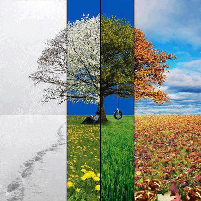 Фото времена года, дерево, красота природы