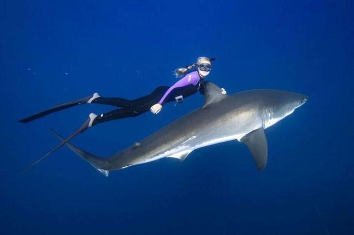 хищник, акула, модель, блондинка, девушка