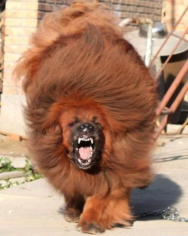 El perro más caro del mundo Sobaka-0003