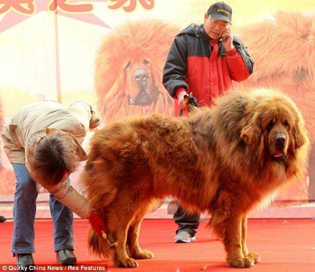 El perro más caro del mundo Sobaka-0005