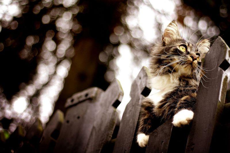 кошка, собака, цена, рост, вес, животные