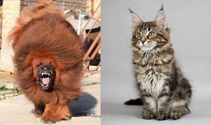 самые маленькие собаки и кошки