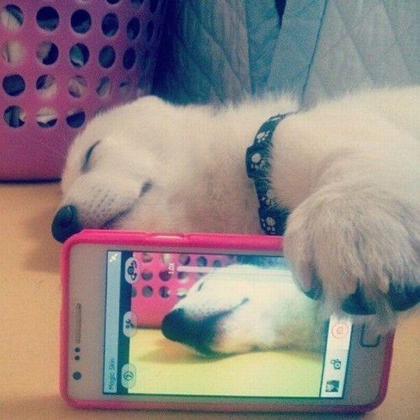Новый фотоприкол айфон, псина, сама себя, фоткает