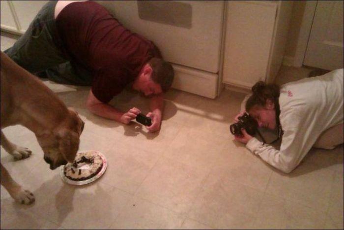 Бесплатный фотоприкол идиотизм, пес, снимают, собака, фоткает