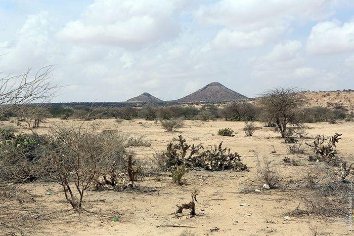 сафари, африка, природа, животные