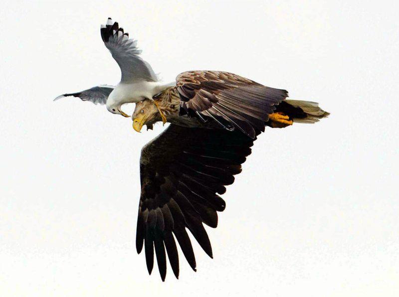 Фотоприкол онлайн бесплатно орел, птицы, чайка