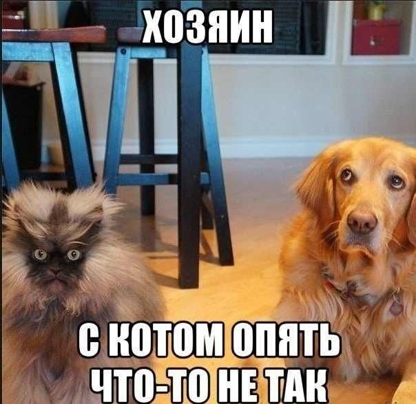 Смешные рисунки картинка с надписью, кот, собака