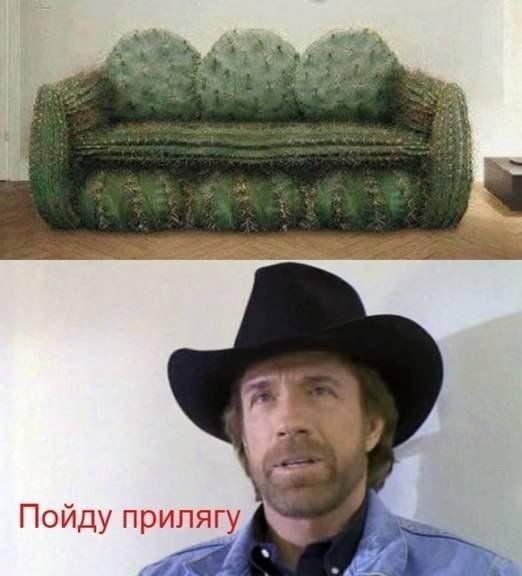 Фотоприкол фото диван, жесть, кактус, чак норрис