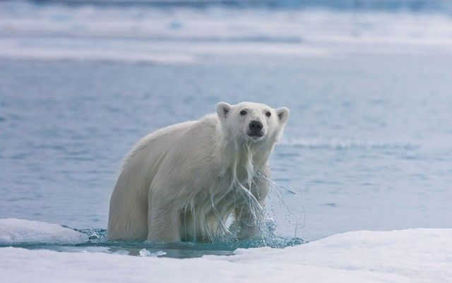 медведь, животное, фотограф, голод, хищник
