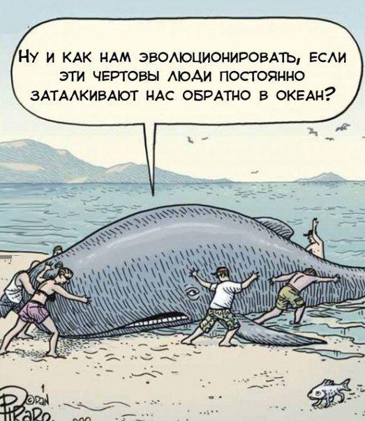 Смешные картинки кит, комикс, прикол, рыба, эволюция