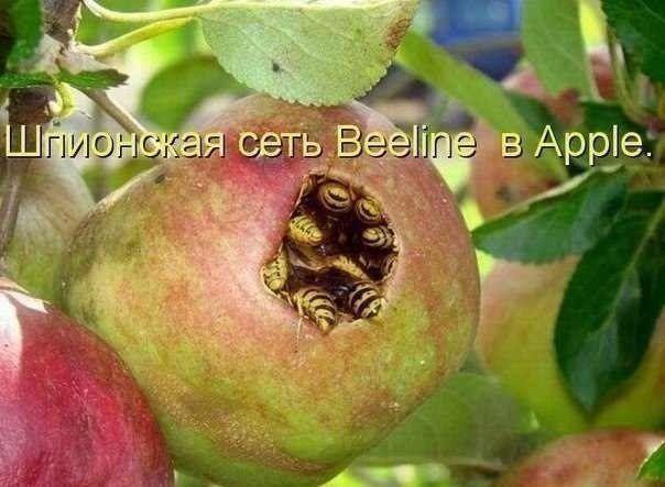Фотоприкол недели билайн, шпионская сеть, эппл, яблоко