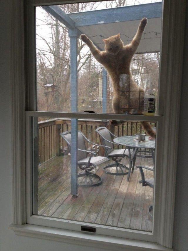 Фото прикол за стеклом, котейка, окно