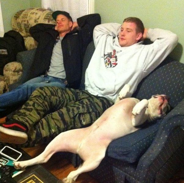 Фото онлайн друзья, на диване, собака и хозяин