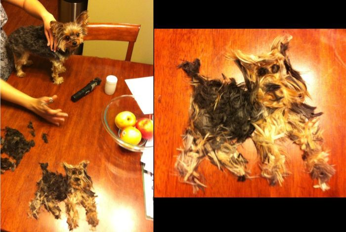 Юмор прикольная фотка, собака, стрижка, шерсть