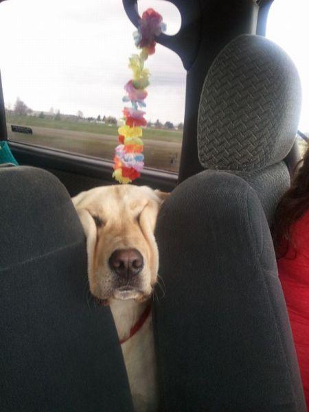 Новые фото выражение лица, питомец, собака