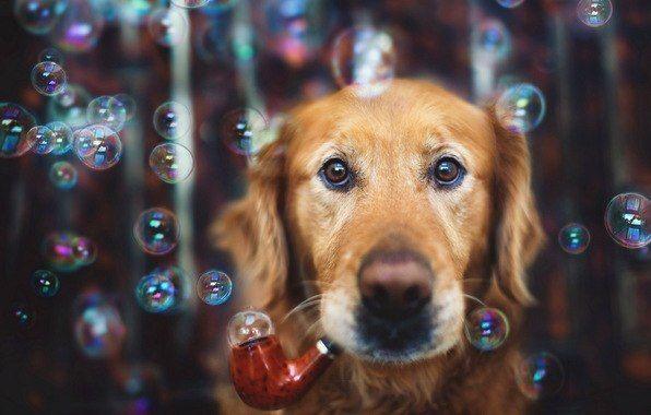 Фото крутая фотка, мыльные пузыри, собака, трубка