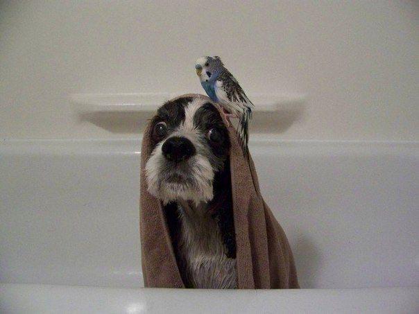 Новые фото выражение лица, попугай, собака