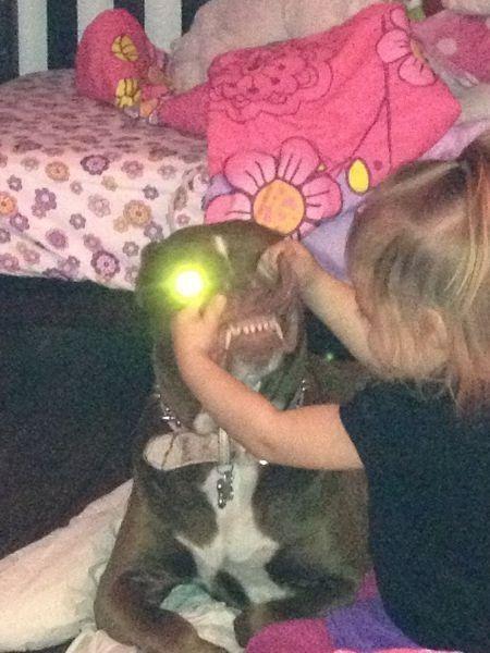 Смешной фотоприкол выражение лица, питомец, ребенок, собака