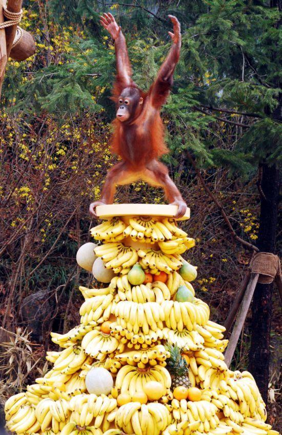 Фото бананы, гора, еда, обезьяна, примат, фрукты