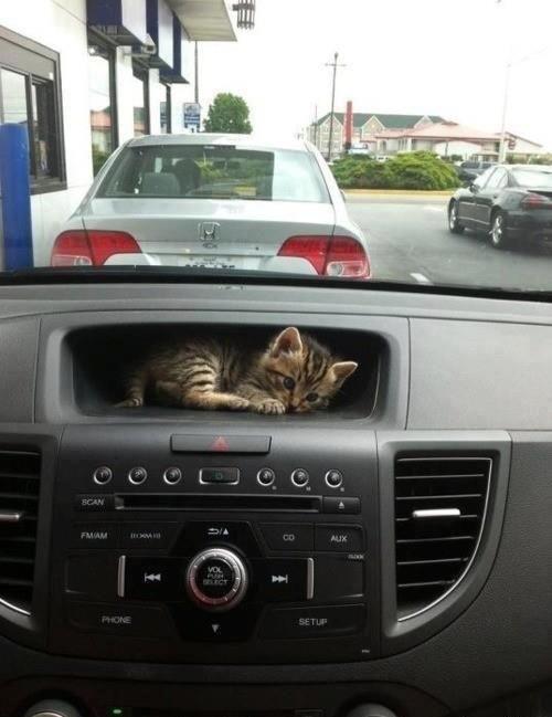Улетное фото в машине, котенок, прикол, приспособился