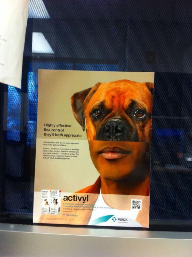 Фотоприкол лекарство, прикольное фото, реклама, собака
