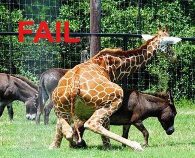 Неудача (20 фото)