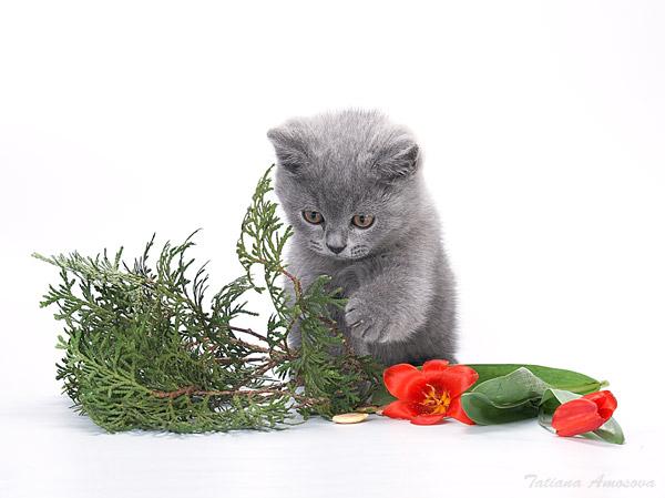 Котенок с цветами к крольчихе пришел (19 фото)