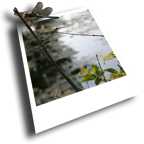 Подборка шикарных 3D-работ (67 фото)