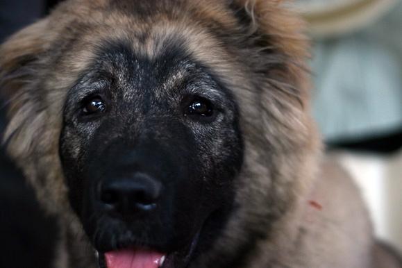 Фоторепортаж с выставки собак (30 фото)