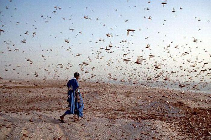 Клипарт нашествие насекомых фото 449-4