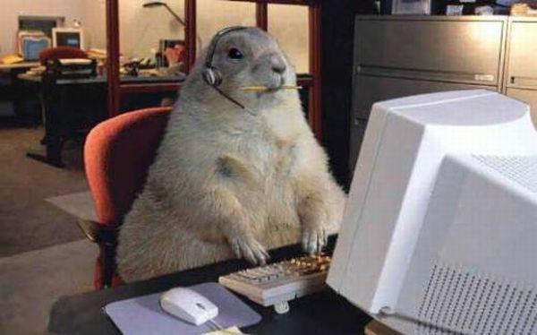 Кот за компьютером гифка